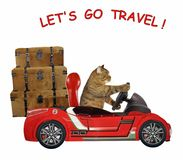 Cat travels by car stock photography