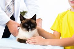 Cat on the treatment by a veterinarian Royalty Free Stock Image
