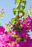 Cat in tree. A cat in a tree royalty free stock image