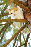 Cat on tree. Scarred white cat on tree photographed frombelow royalty free stock photos