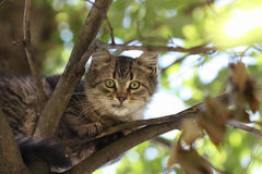 Cat on a tree. Small cat in the garden on tree Royalty Free Stock Photo