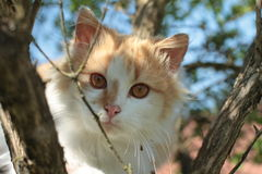 Cat on the tree. Cat sitting on the tree royalty free stock photo