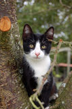 Cat in a tree. Black and white pet cat in tree stock photography