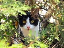 Cat on tree Royalty Free Stock Photos