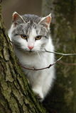 Cat on tree. Domestic cat sitting on the tree Stock Image