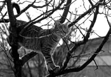 Cat in a tree. Picture of a cat in a tree Stock Images