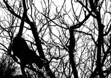 Cat in a tree. Silhouette of a cat in a tree Royalty Free Stock Photography