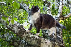 Cat on a tree Stock Images