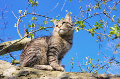 Cat on tree Stock Image