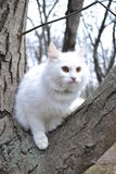 Cat on the tree. Cat is sitting on the tree Stock Images