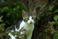 Cat in Tree Stock Images