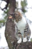 Cat on a tree Royalty Free Stock Photo
