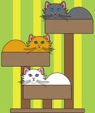 Cat Tree Stockbild