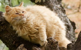 Cat on a tree Royalty Free Stock Photos