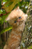 Cat in the tree. Cat climbing a tree Stock Photo