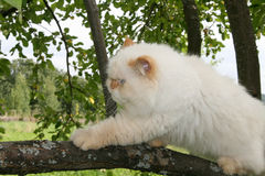 Cat in a tree. Cat strolling in a tree Stock Photography