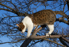 Cat on the tree against the sky Stock Images