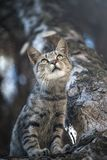 Cat on the Tree. A cat is in ambush on the tree Royalty Free Stock Image