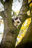 Cat on a tree. autumn royalty free stock photography