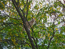 Cat on tree in autumn Stock Image