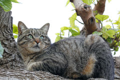 Cat in a tree Stock Image