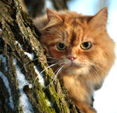 Cat in a tree Stock Images
