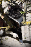 Cat on the tree Royalty Free Stock Images