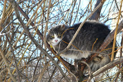 Cat on a tree. Among branches winter stock images