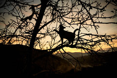 Cat on a tree. Cat climbed on a tree with a sunset background Stock Photos