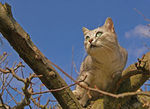Cat on the tree. Cat climbing on the tree and blue sky in the background Stock Photos