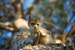 Cat on a tree. Close up of a cat Royalty Free Stock Photos