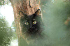 Cat in the tree Royalty Free Stock Photography