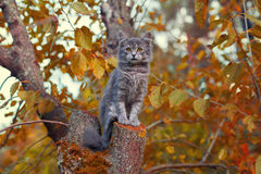 Cat on the tree Stock Image