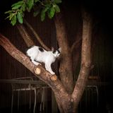 Cat on a tree. Cute white cat on a tree Stock Image