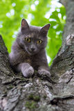Cat at a Tree. Domestic Cat at a Tree Branch at Blurred Background Stock Images