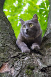 Cat at a Tree. Domestic Cat at a Tree Branch at Blurred Background Royalty Free Stock Photography