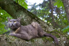 Cat at a Tree. Domestic Cat at a Tree Branch at Blurred Background Royalty Free Stock Image