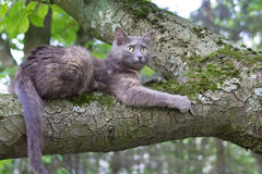 Cat at a Tree. Domestic Cat at a Tree Branch at Blurred Background Royalty Free Stock Images