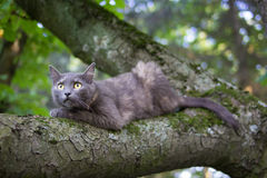 Cat at a Tree Royalty Free Stock Photography