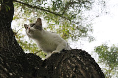 Cat in tree Royalty Free Stock Photos