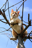 Cat on the tree Royalty Free Stock Photography