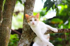 Cat in the tree at home garden. Cat ree tree home garden stock photo