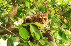 Cat on a Tree Royalty Free Stock Image