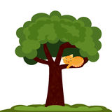 A Cat on a tree  Stock Photography