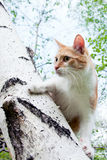 Cat on the tree Royalty Free Stock Photos