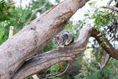 Cat on tree Stock Images
