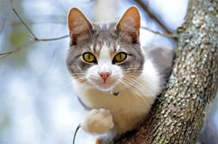 Cat in a Tree Looking Out at His World Stock Photography