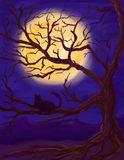Cat, tree and moon. Black cat lie on the branch and look at moon Stock Photos