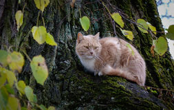 A cat on the tree at rainy day in summer time Stock Photo