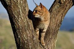 The cat on the tree. Shot of a sweet Pet in the countryside Royalty Free Stock Photo